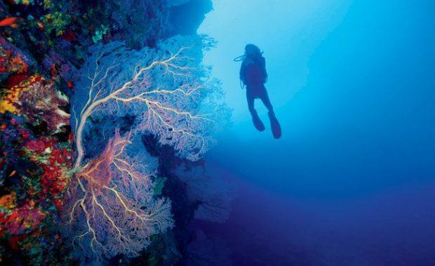Andaman marine life Midday