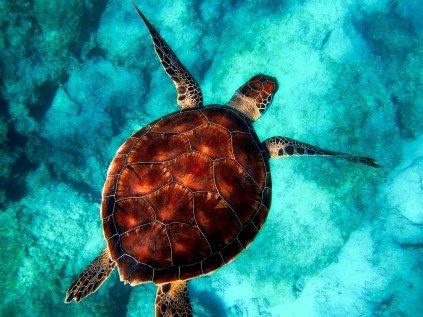turtle andaman