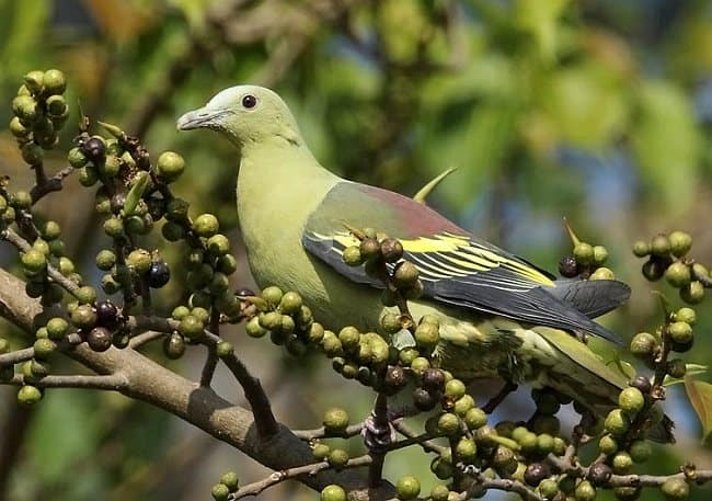 Bird watching in Andaman