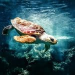 Turtle nesting in Andaman: All you want to know